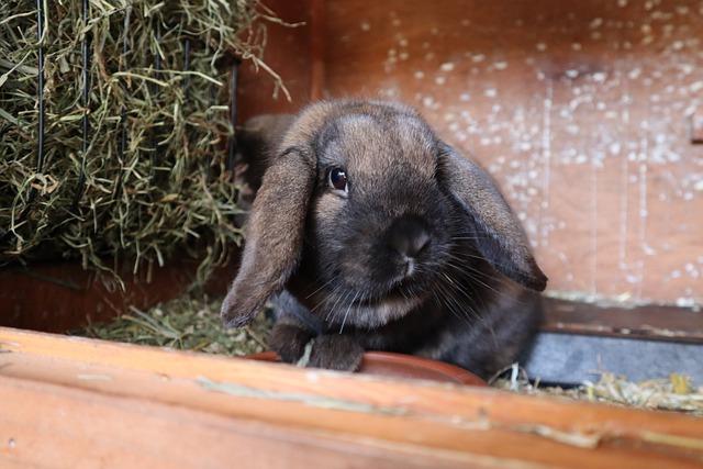 Kaninchen Erdnüsse