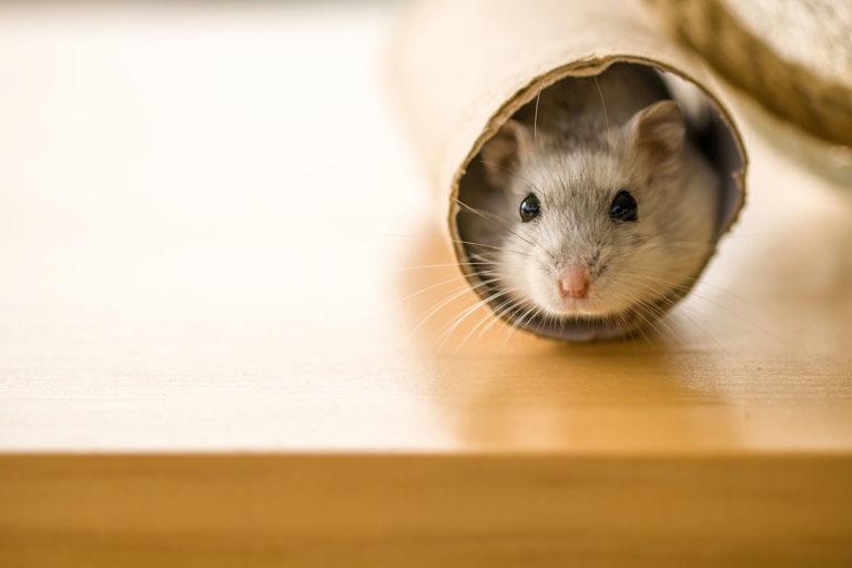 Die ultimativ-süße Namensliste für Hamster: weiblich und